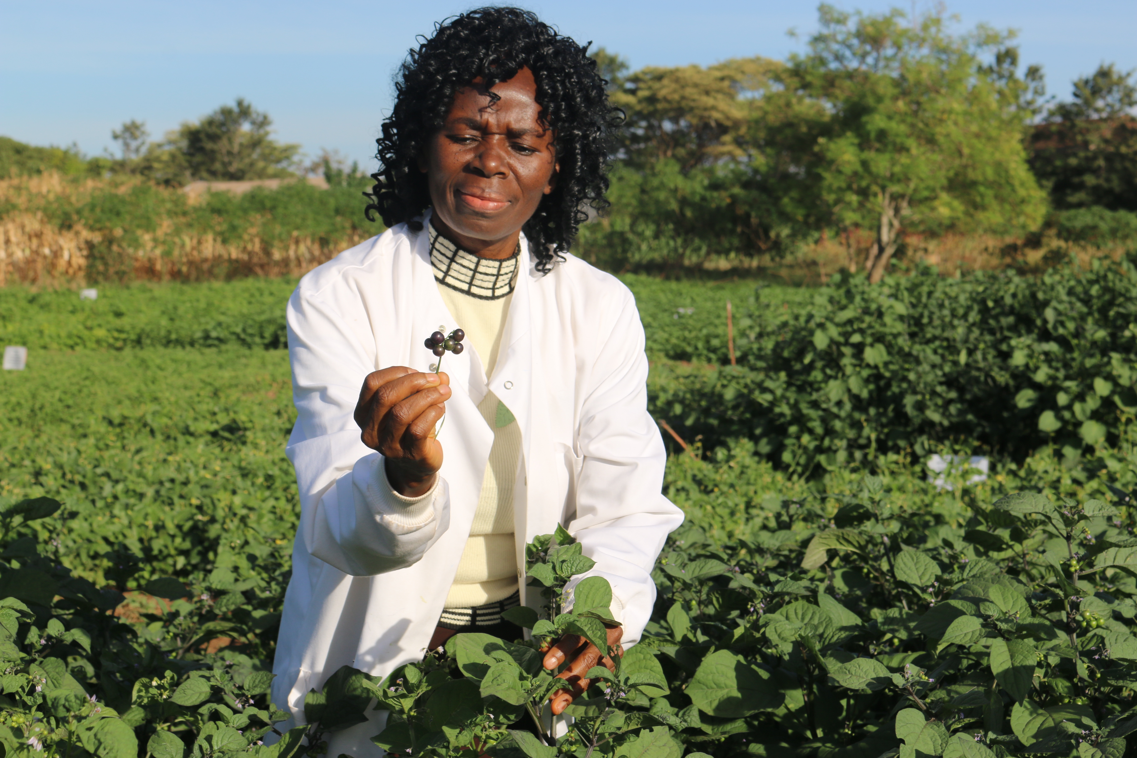 Prof. Mary Abukutsa in her natural habitat, with her vegetables.
