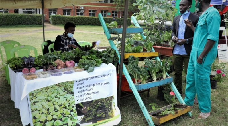 Students from the Horticulture Students Association (HOSA) at their exhibition stand